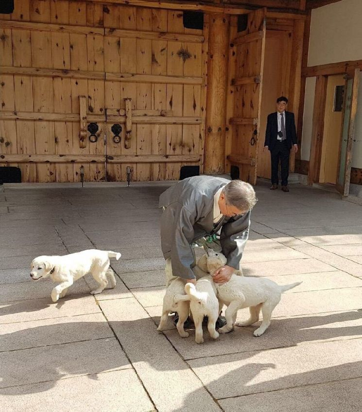 한복을 갖춰입은 문재인 대통령이 설 연휴 마지막 날인 6일 청와대 관저에서 김정은 북한 국무위원장으로부터 선물 받은 풍산개 '곰이'가 낳은 강아지들과 즐거운 시간을 보내고 있다. (사진=청와대)