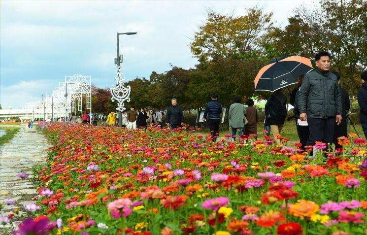 전남 장성군 황룡강변 백일홍 꽃길을 관광객들이 걷고 있다. 사진=장성군