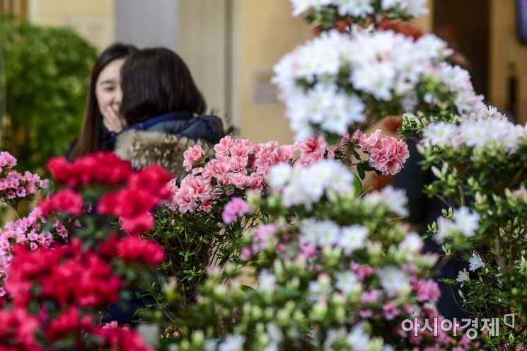 [포토]봄꽃을 만나다