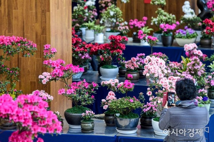 [포토]형형색색 봄 꽃 한가득
