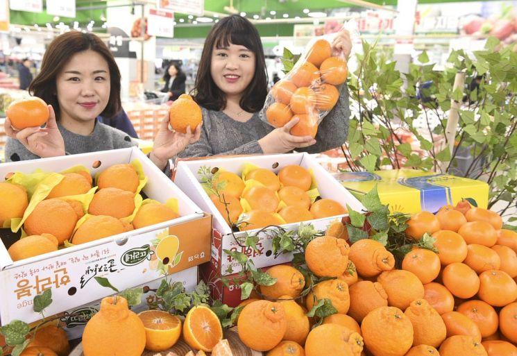농협유통, 하나로마트 양재점서 한라봉·천혜향 골라담기 행사