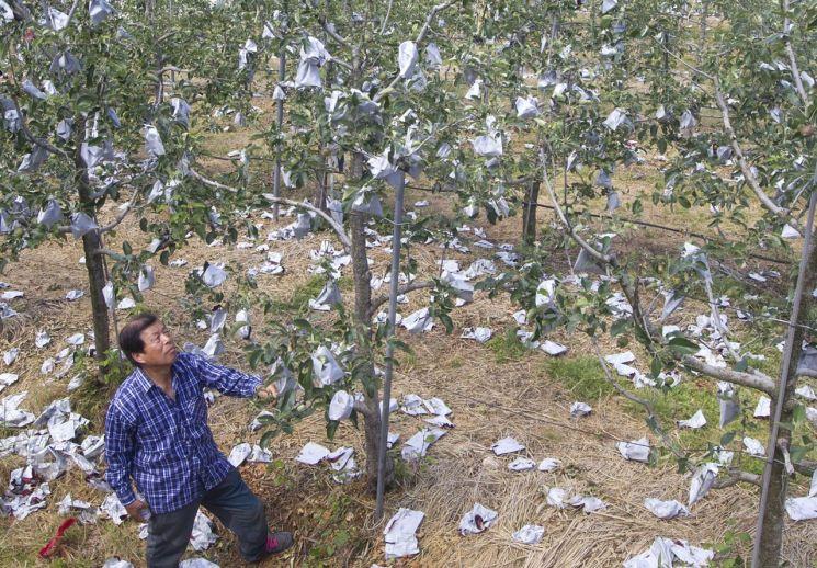 NH농협손보, 2019년도 농작물재해보험 판매 시작