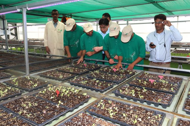 KT의 스마트팜, 열사의 땅에 희망을 재배하다