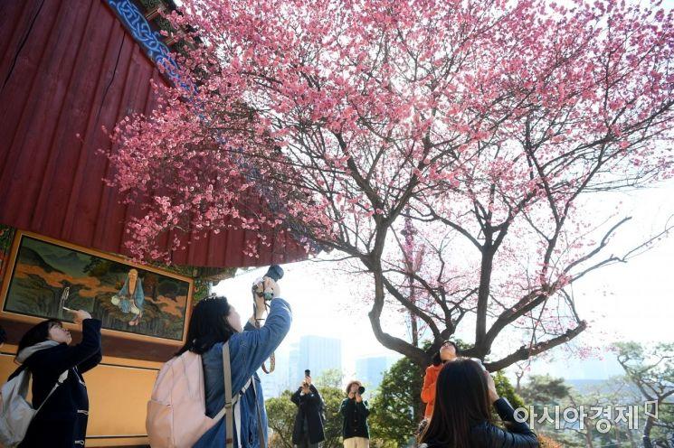 [포토] 봄을 알리는 홍매화