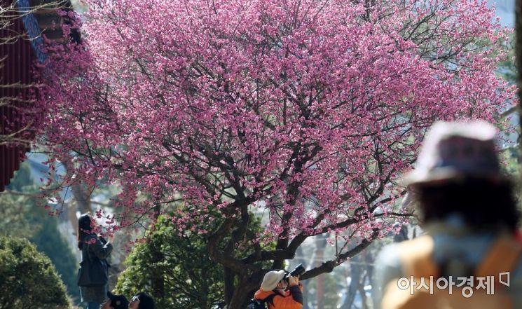 [포토] 봄을 담는 시민들