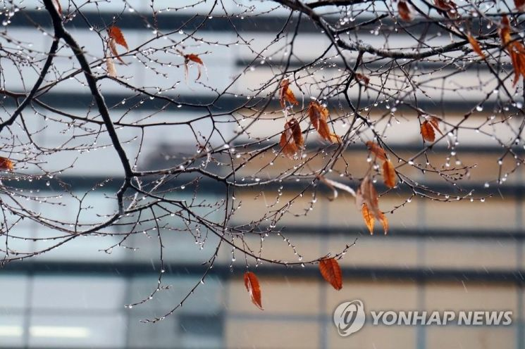 나뭇잎에 묻은 빗방울 / 사진 = 연합뉴스