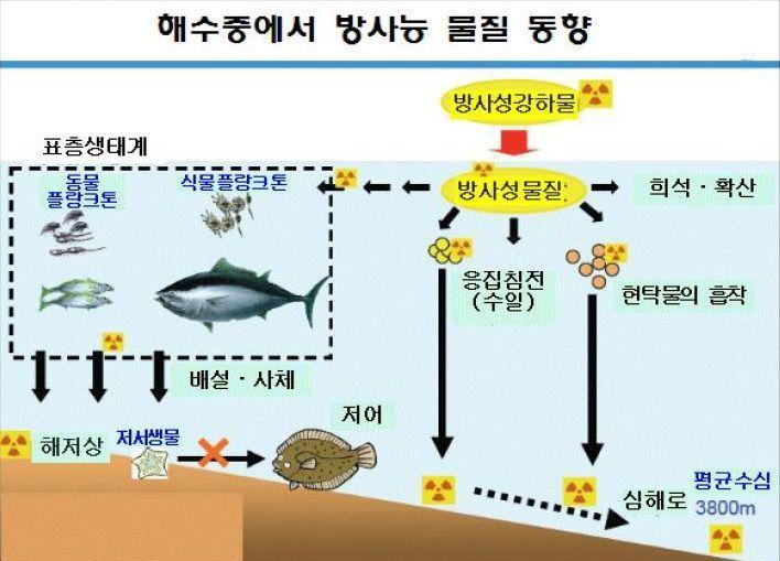 개별 어종들의 방사성 물질 농축량은 적다고 해도 해양생태계 먹이사슬을 타고 최종 포식자인 대형어류 및 포유류들의 경우에는 방사성 물질의 축적이 상당량 발생할 위험이 있다.(자료=국립수산과학원)