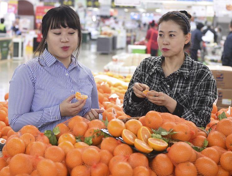 12일 서울 서초구 농협하나로마트 양재점에서 모델들이 올해 첫 출하된 국산 청견 오렌지를 선보이고 있다.