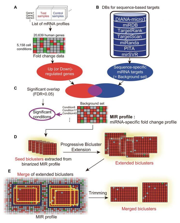 유전자 발현 빅데이터로 마이크로RNA 발굴하는 바이클러스터링 알고리즘