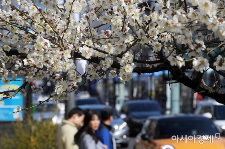 [포토]봄 향기 가득한 도심