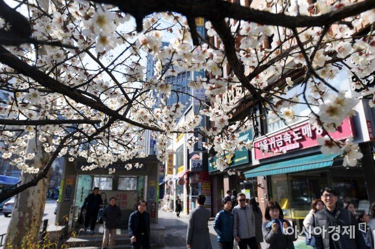 [포토]서울 도심에 핀 봄꽃