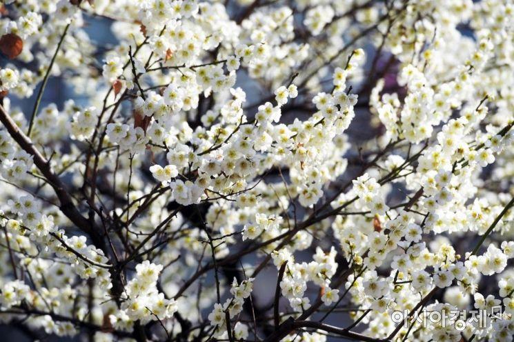 [포토]봄 향기에 취한다!