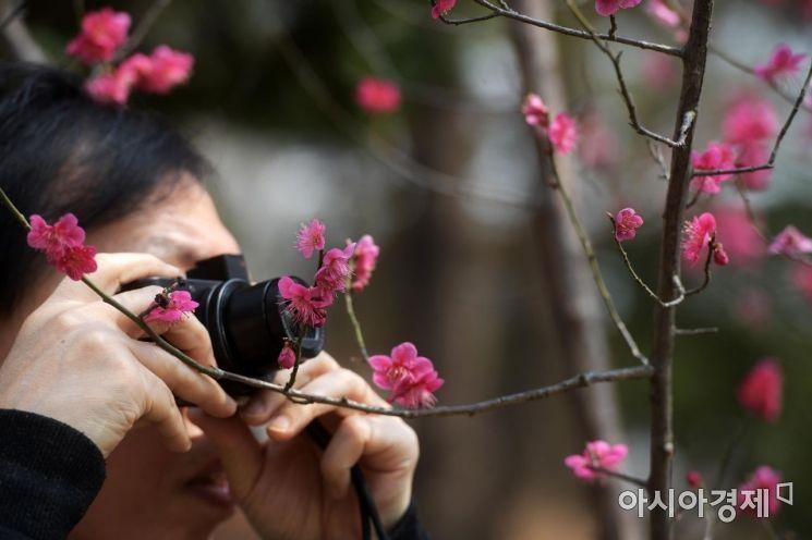 [포토]'꽃피는 봄이 왔어요'