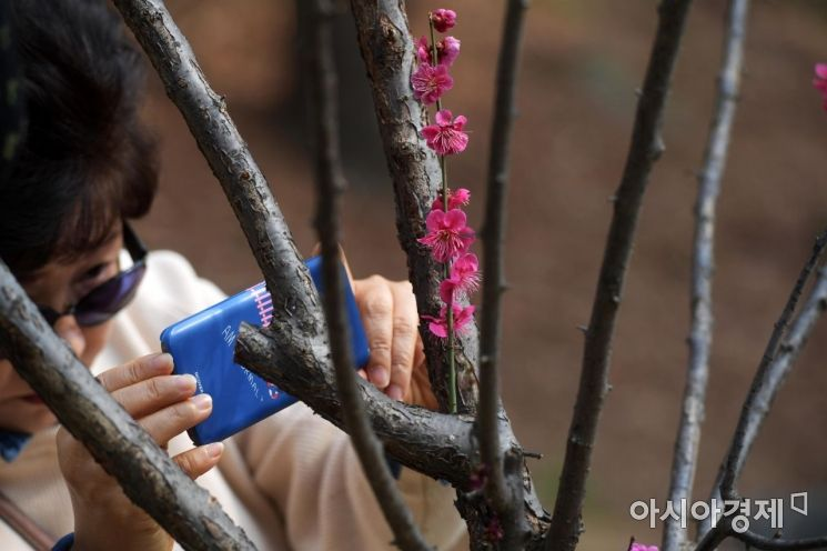 [포토]봄꽃 나들이
