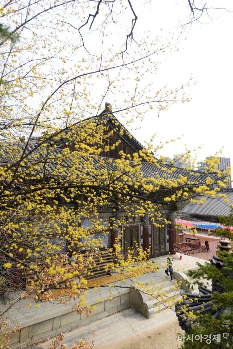 [포토]'봄이여 오라'