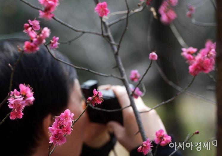 [포토]'반갑다, 봄아'