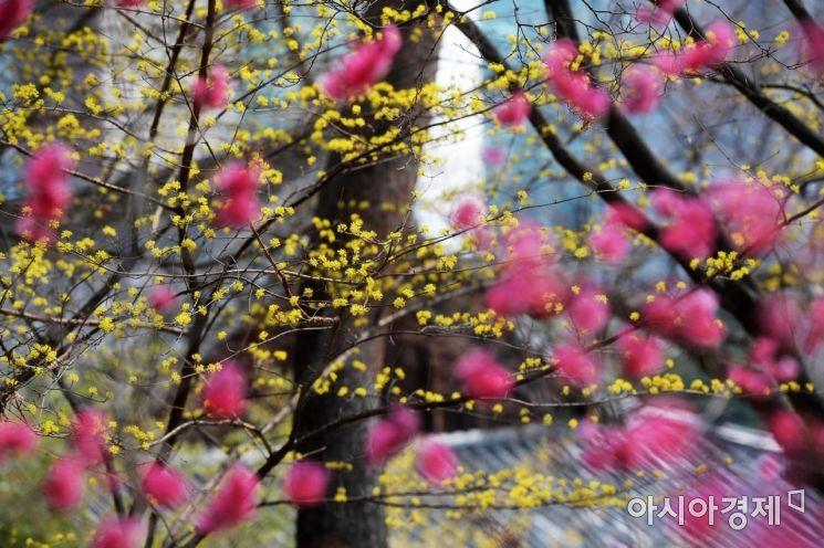 [포토]'봄봄봄 봄이 왔어요'