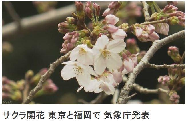 출처: NHK방송 캡쳐