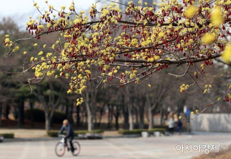 [포토] 노란 산수유와 붉은 열매