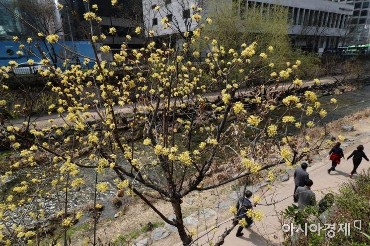 [포토]봄을 걷다