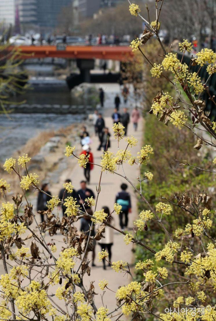 [포토]봄날 산책