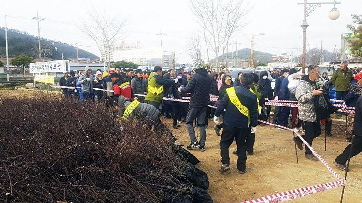 진도군산림조합 추모관 주차장에서 '나무 나눠 주기' 행사를 하고 있다. 사진=진도군