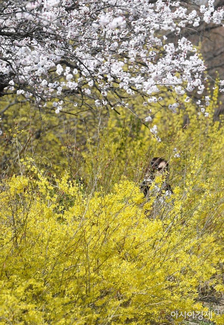 [포토] 서울의 봄