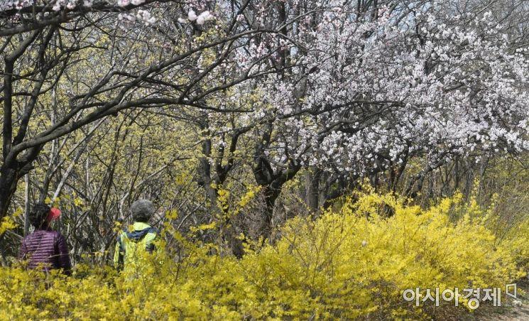 [포토] 한강공원의 봄