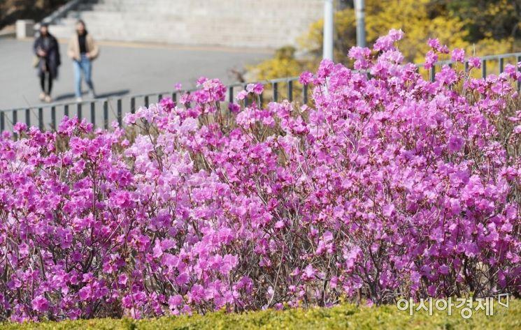 [포토]두근두근 설레는 봄날 캠퍼스