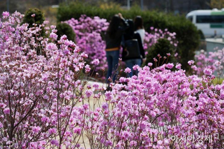 [포토]설레는 봄, 향기 가득한 캠퍼스