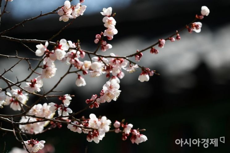 [포토]봄은 온다