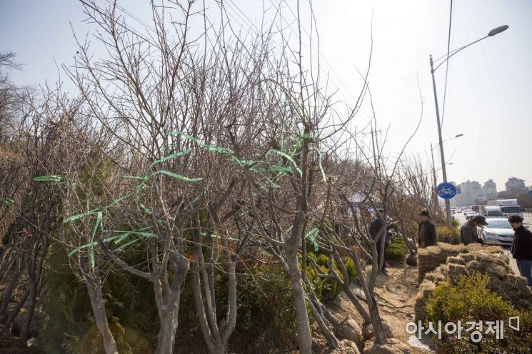 [포토] 완연한 봄, '활기찬 나무시장'