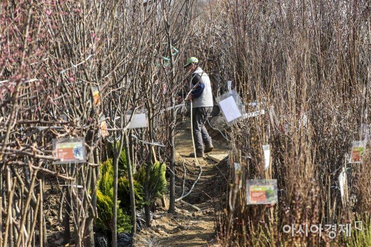 [포토] 묘목 가득한 나무시장