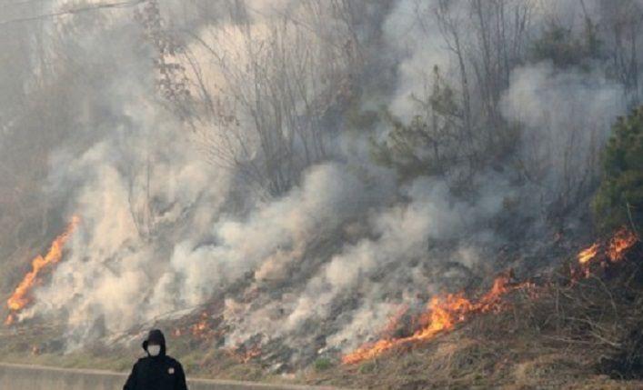 잡풀 태우다가 산림 385㏊ 소실…'인제산불' 실화자 노인 입건