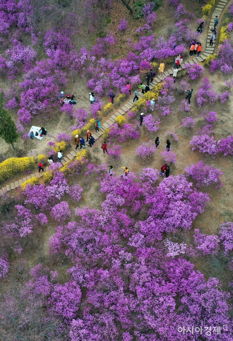 [포토]두근두근 진달래 축제