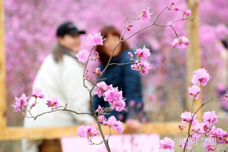 [포토]분홍빛 주말