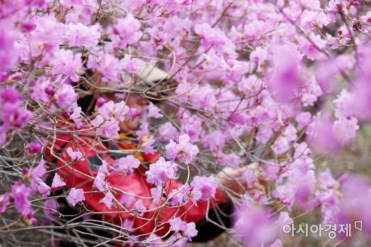 [포토]꽃속에서 봄기운 만끽