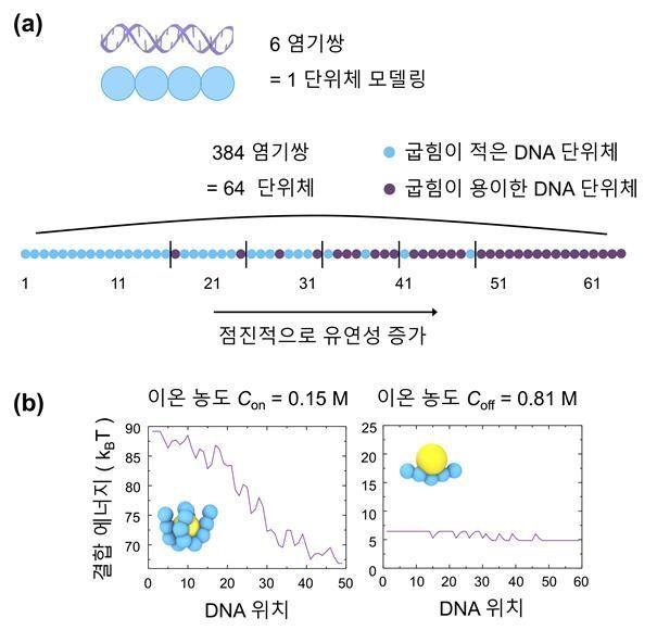 DNA-나노입자의 결합에너지 비대칭적 설계