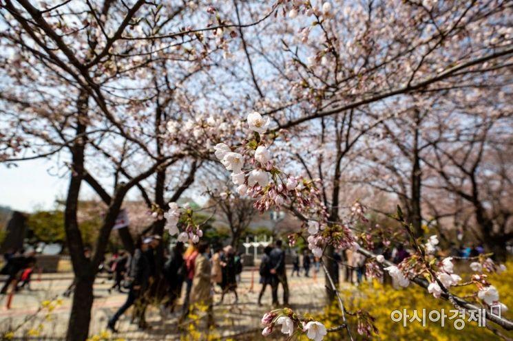 [포토] 봄의 향연