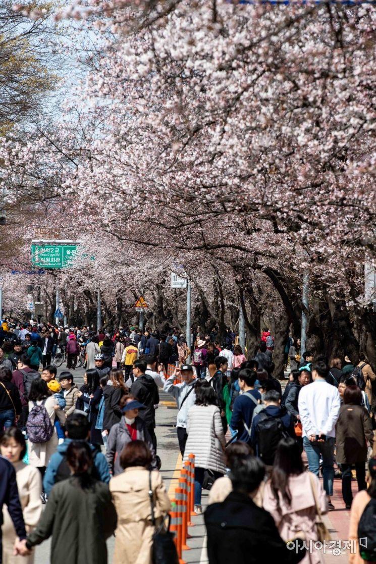 [포토] 벚꽃과 함께하는 시민들