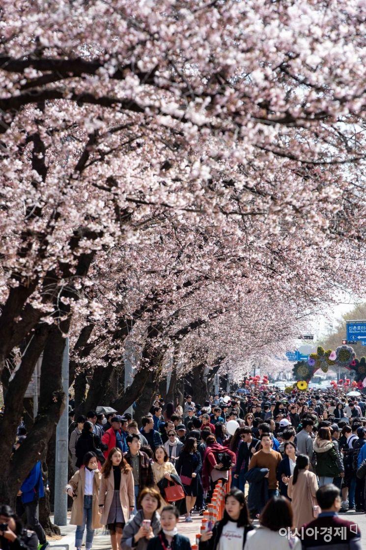 [포토] 여의도 벚꽃 축제 첫 주말