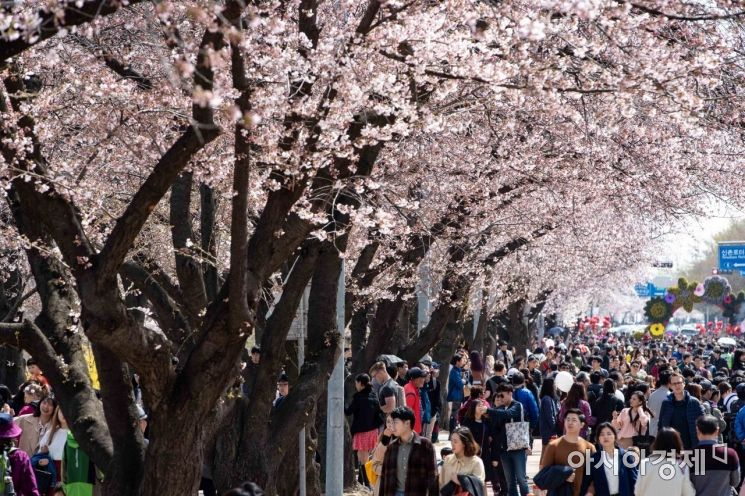 [포토] 기다리던 벚꽃축제 시작