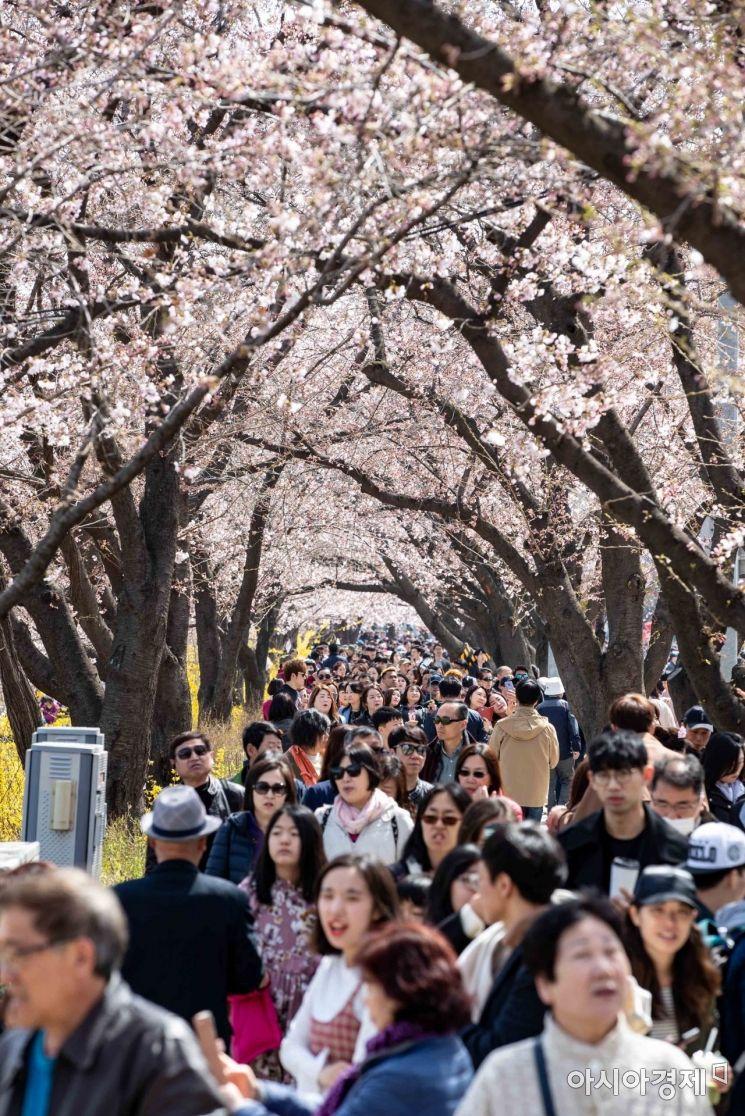 [포토] 여의도 벚꽃축제 인파