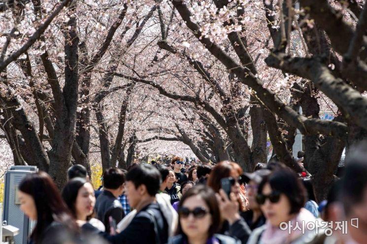 [포토] 2019 여의도 벚꽃축제