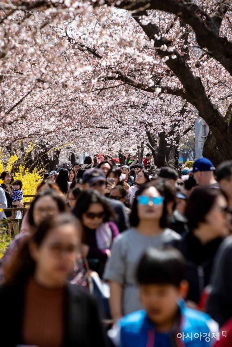 [포토] 벚꽃축제 찾은 시민들