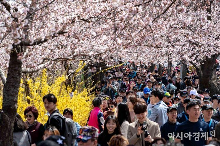 [포토] 벚꽃터널