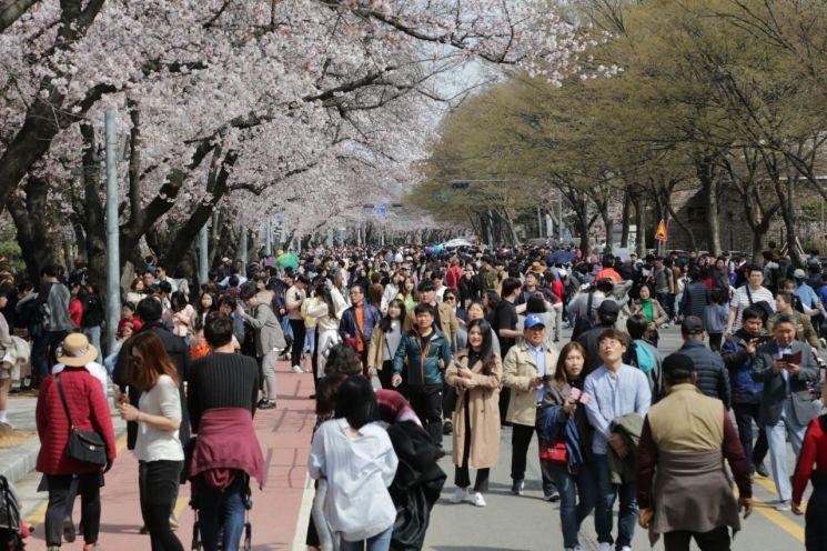 [포토]'여의도 봄꽃축제' 사흘만에 관광객 413만여명 찾아
