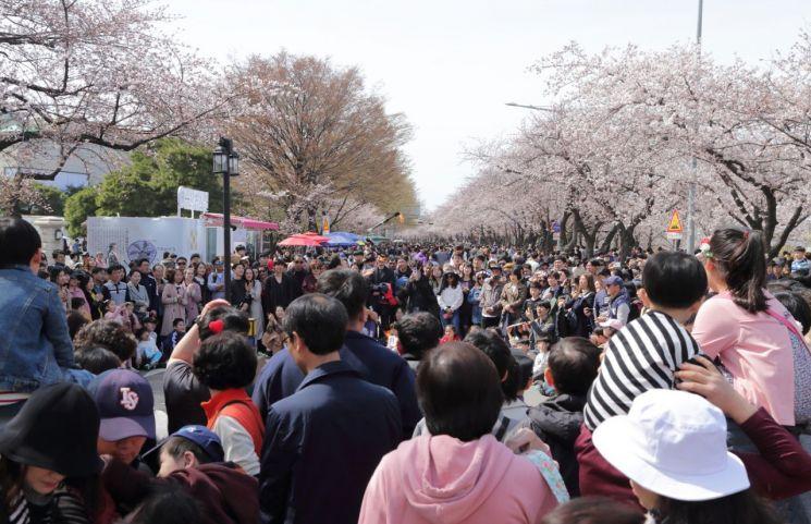 여의도 봄꽃축제 인파