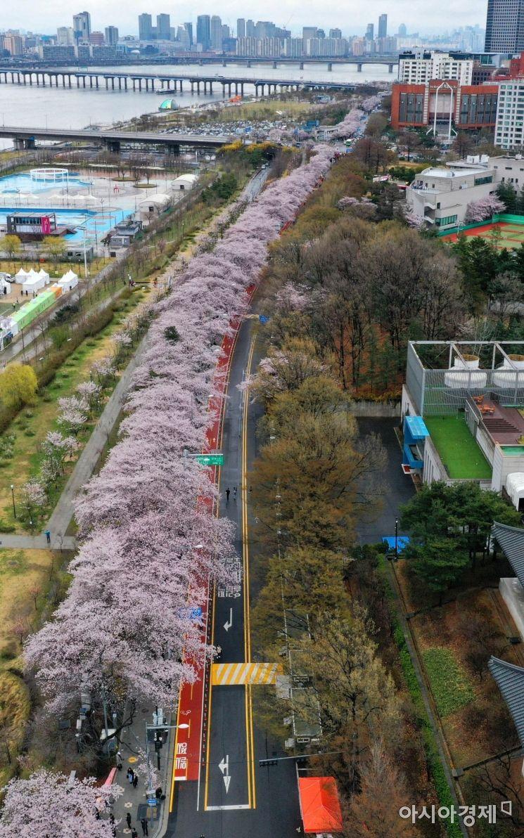 서울 여의도 국회 인근 윤중로에 벚꽃이 만개해 있다. /문호남 기자 munonam@