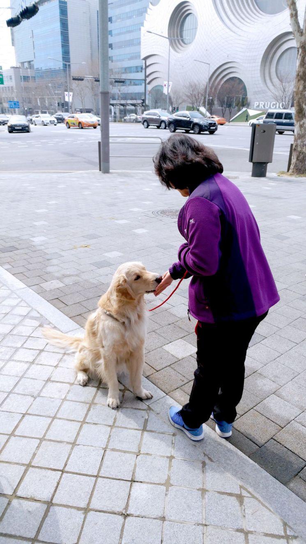 강북구, 애완견 산책·돌봄하는 '도그워커' 교육생 20명 모집
